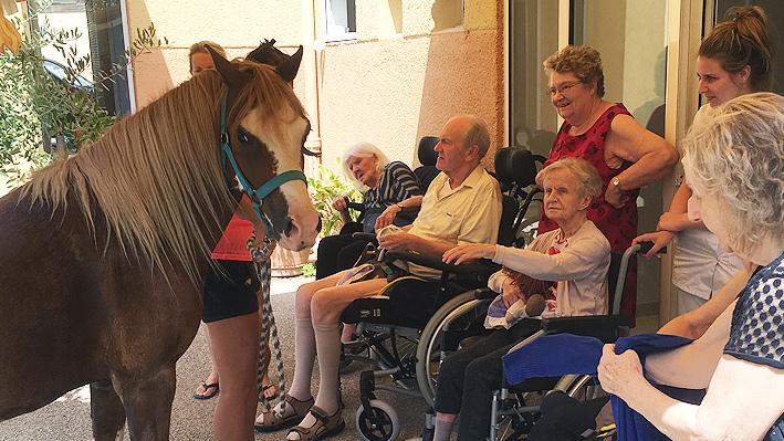 La visite d'un poney pour nos résidents de la Bastide de Pégomas