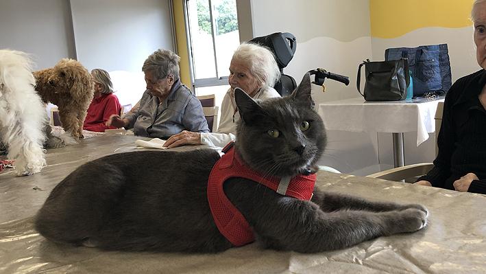 Médiation animale pour nos résidents de la Bastide de Pégomas