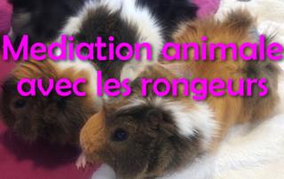 Médiation animale avec nos amis les rongeurs pour nos résidents de la Bastide de Pégomas